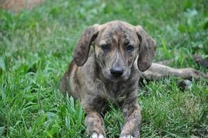 Adopt knox on #plotthound