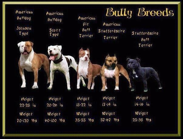 Pitbulls Are A Classification Of Dog Breeds There S More Than