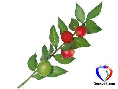 دنيتي فوائد الأس البري الشائك Plants Fruit