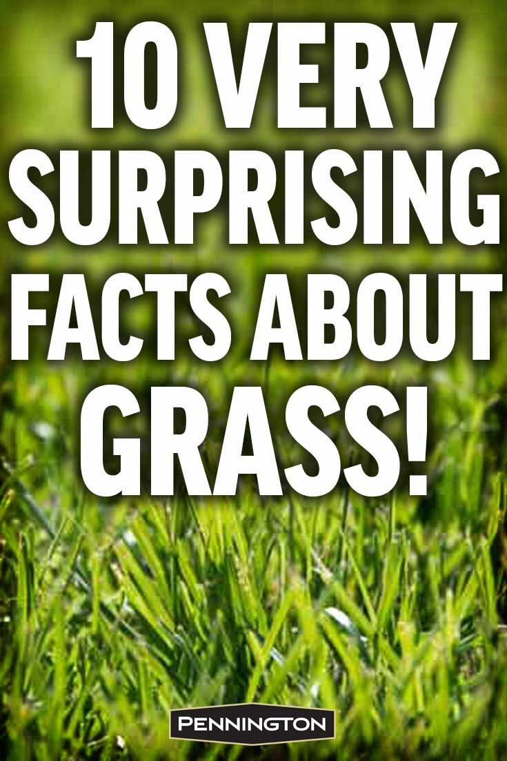 10 Surprising Facts About Grass Lawn Care Grass Lawn