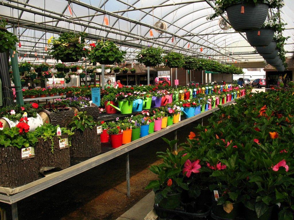 w w greenhouse u003c3 flowers and gardening pinterest flowers