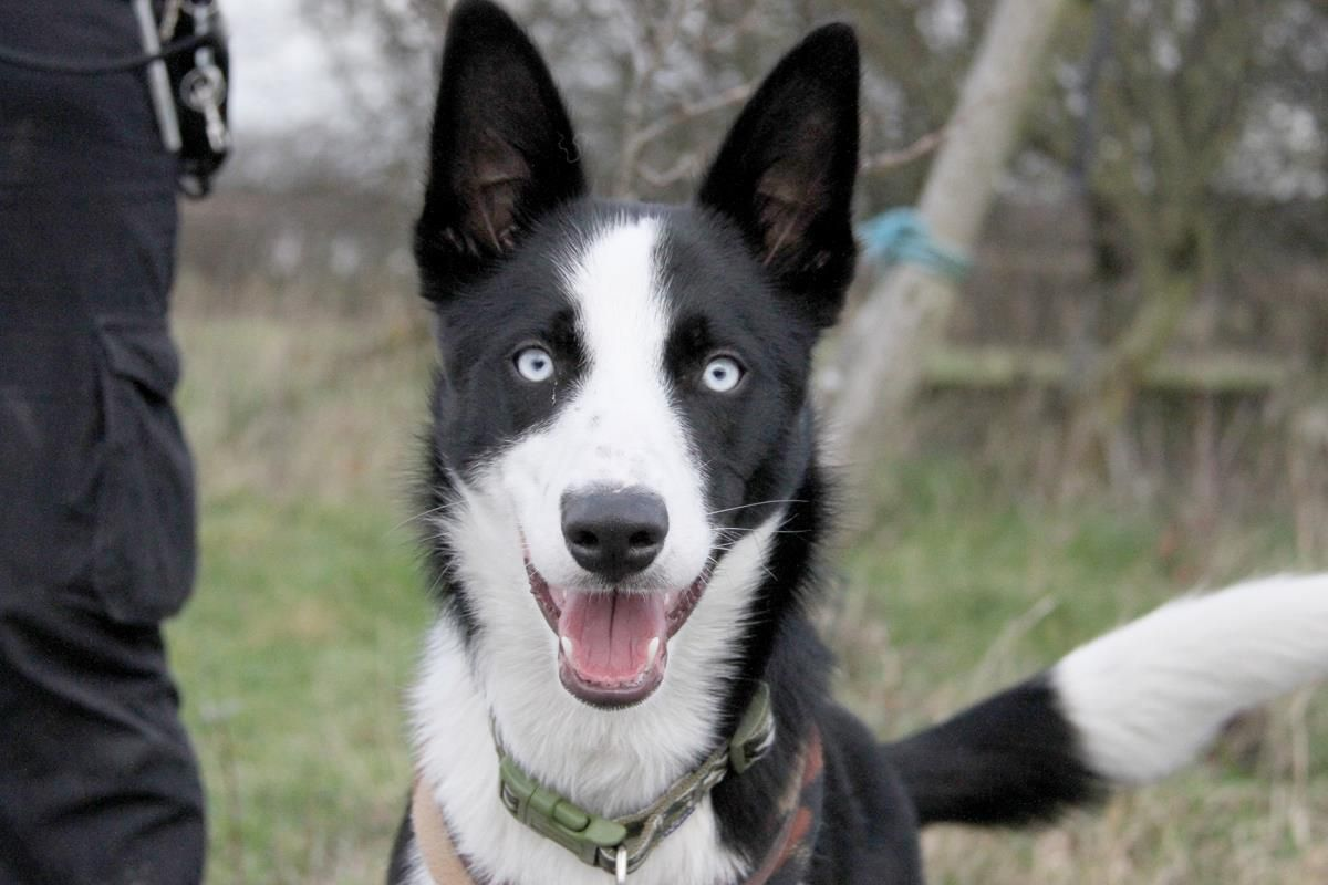 Pin By Rescue Pets On Dogs Collies In Rescue Dog Friends Rehoming Rescue Dogs