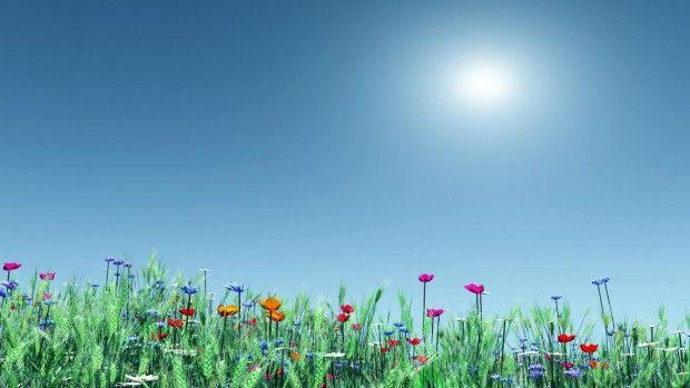 Cool Summer Flowers Wallpaper