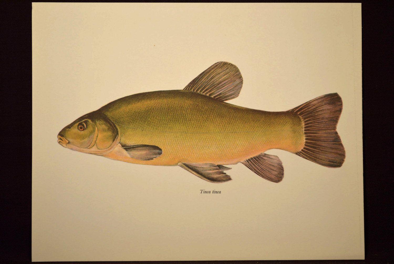 Fish Wall Decor Cabin Wall Art Fish Print Fishing Print | Decor ...