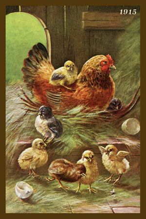 Olde America Antiques | Quilt Blocks | National Parks | Bozeman Montana : Chickens - Hen and Chicks 5c