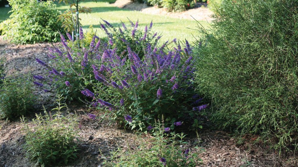 10 Flowers That Smell Seriously Amazing Plants, Outdoor
