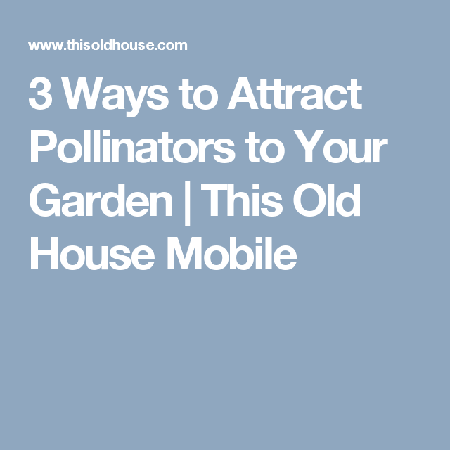 3 Ways to Attract Pollinators to Your Garden | This Old House Mobile