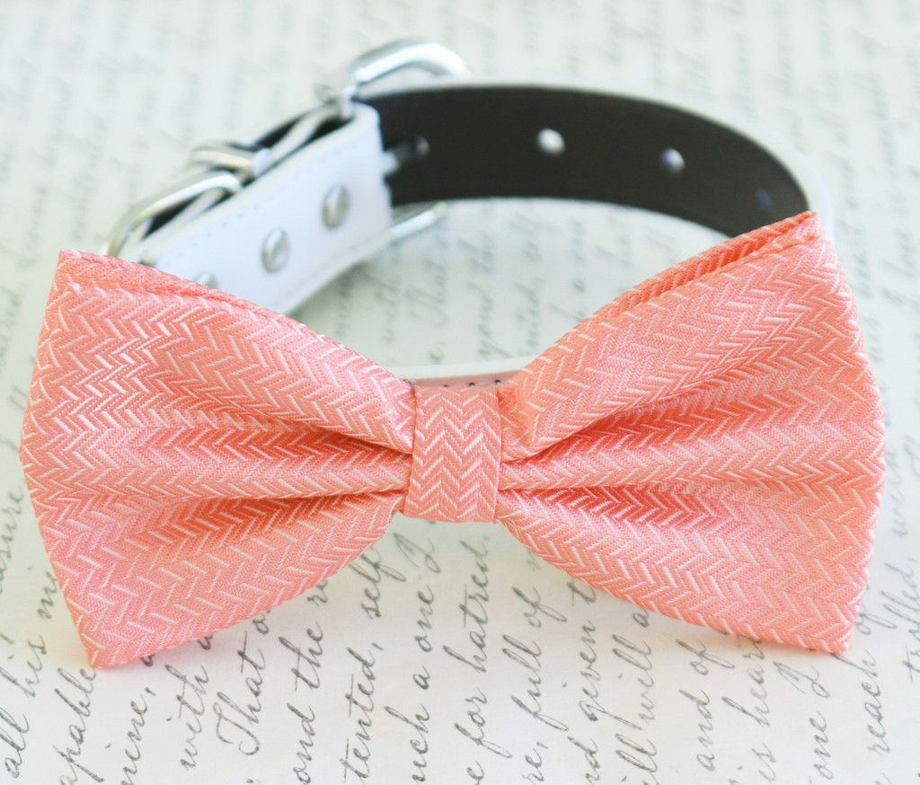 Coral dog Bow tie attached to collar, Coral wedding, Coral bow, Dog ...