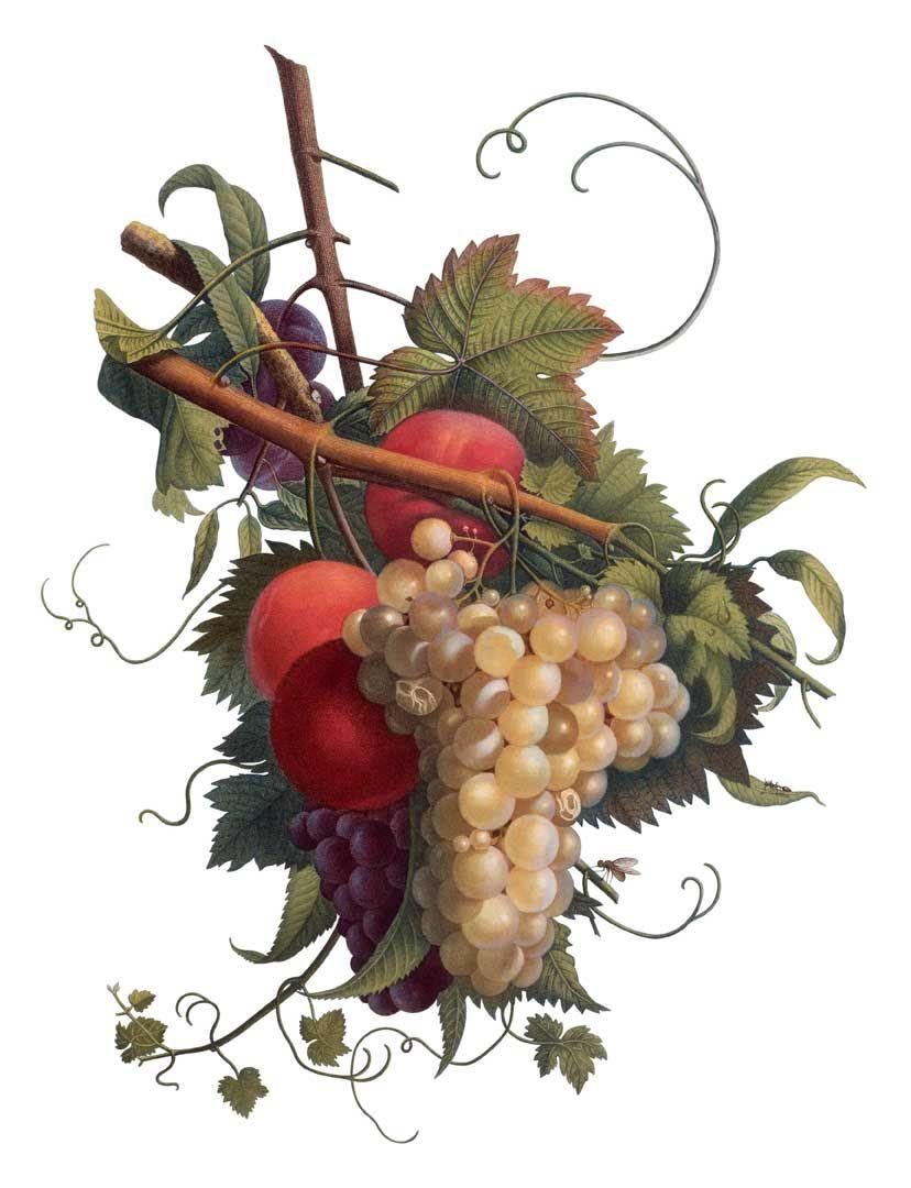 El dibujo botánico | El Dibujante