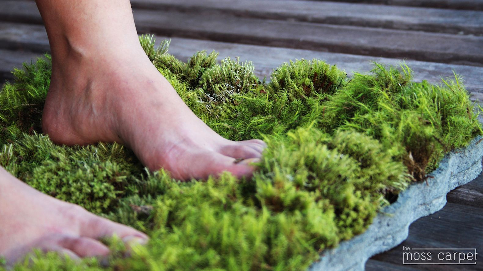 Fesselnde Moos Badematte Beste Wahl The Mini Moss Carpet Is On Kickstarter