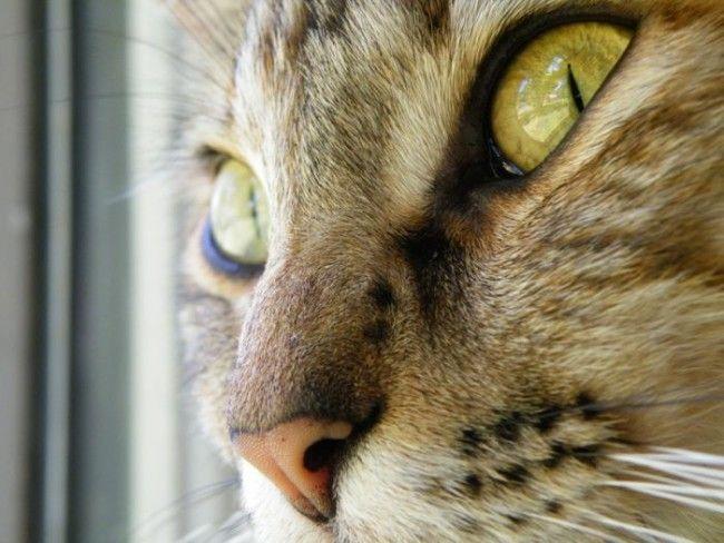 Cats (136 photos) (41)