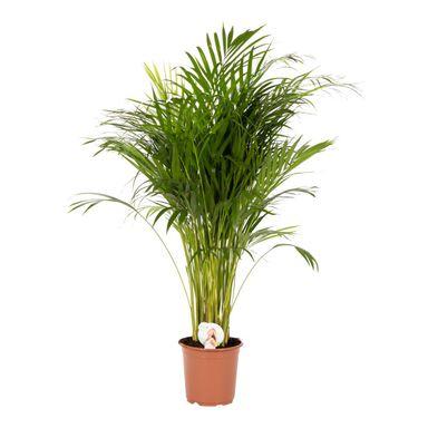 Rosliny Zielone Mix 100 Cm Air So Pure Kwiaty Doniczkowe W Atrakcyjnej Cenie W Sklepach Leroy Merlin Plants