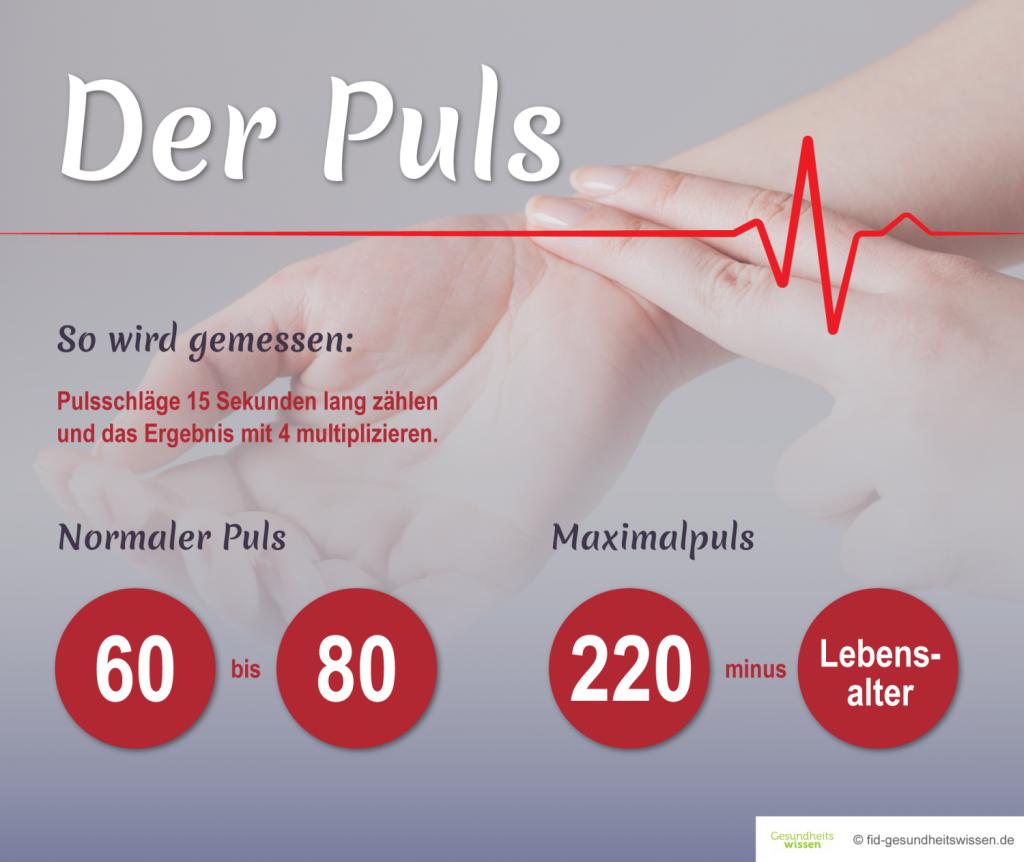 Normaler Puls Schwangerschaft