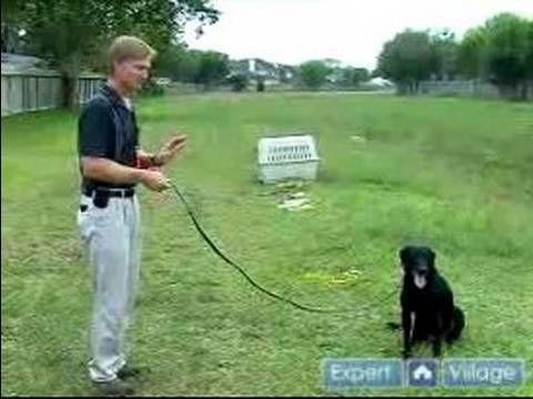 Train Your Bird Hunting Dog To Stay On Command In This Free Video