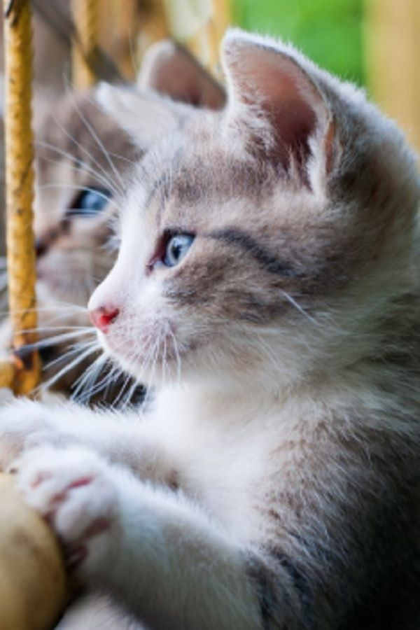 Nobody Thought This Tiny Abandoned Kitten Would Make It 7 Weeks Later Getting A Kitten Kittens Cats