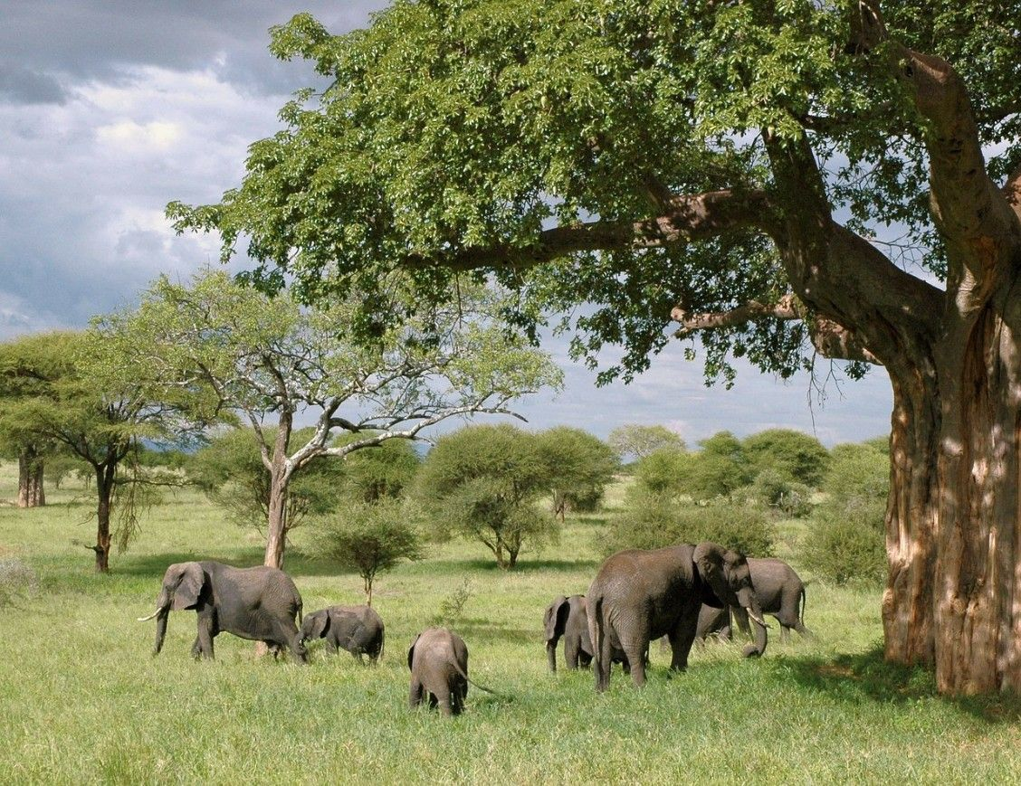 Selous Game Reserve is one of the largest national parks