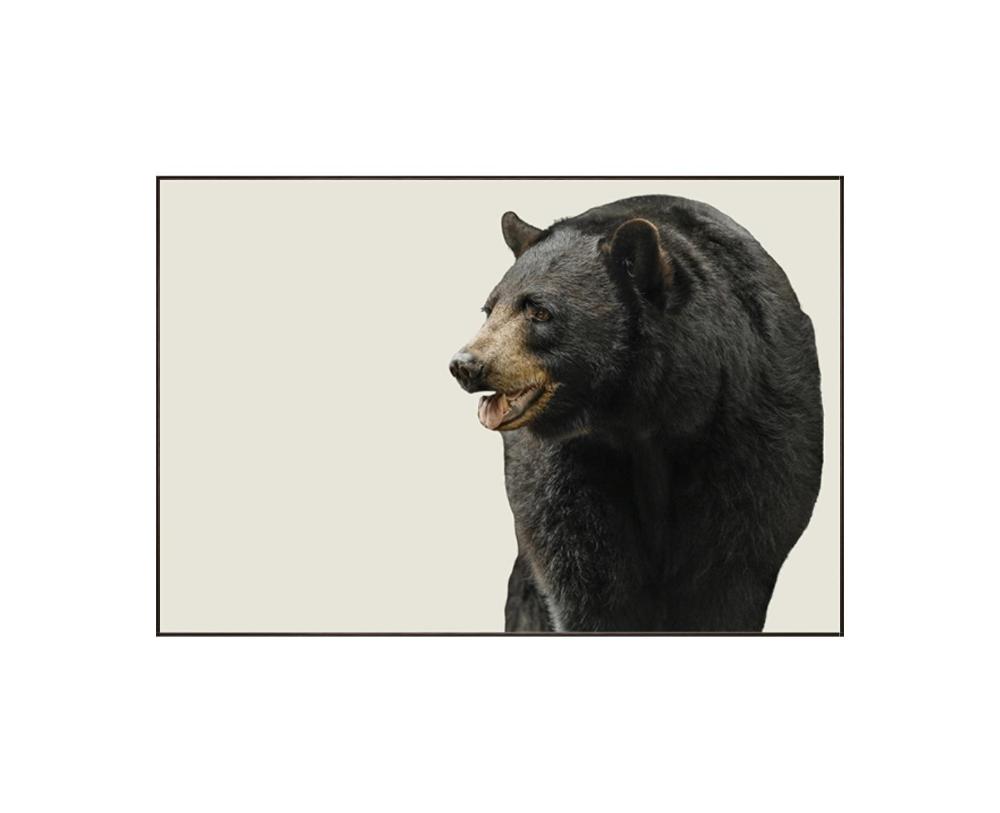 Leftbank Art 52mw0149 Black Bear Art Bear