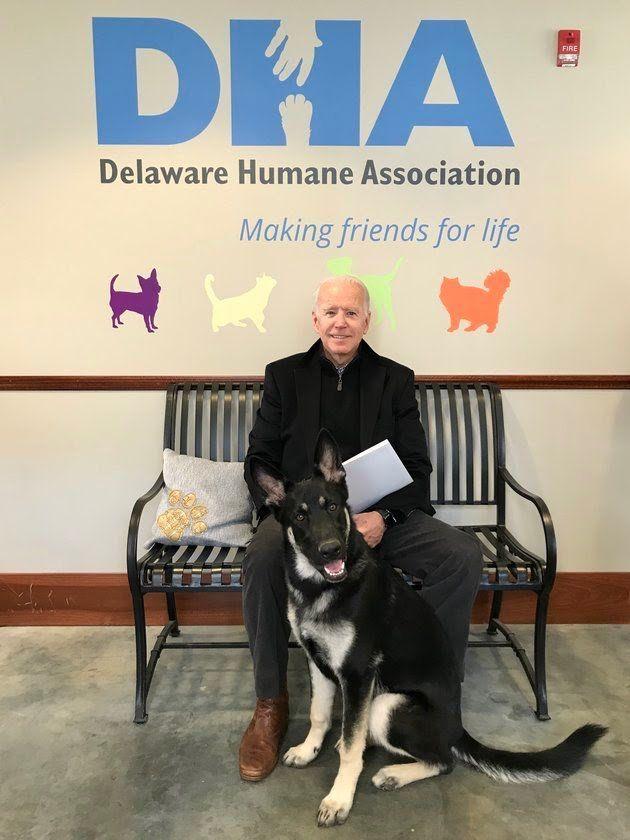 Joe Biden Adopts Rescue Dog Named Major Fur Babies Foster Dog
