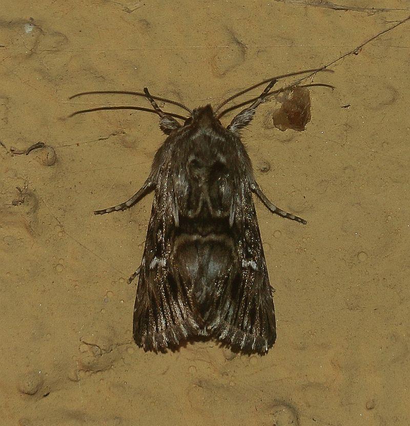 In Deutschland Gibt Es Uber 3700 Arten Von Schmetterlingen In Form Von Tagfalter Nachtfalter Und Kleinschmetterlinge Die A Nachtfalter Schmetterling Insekten