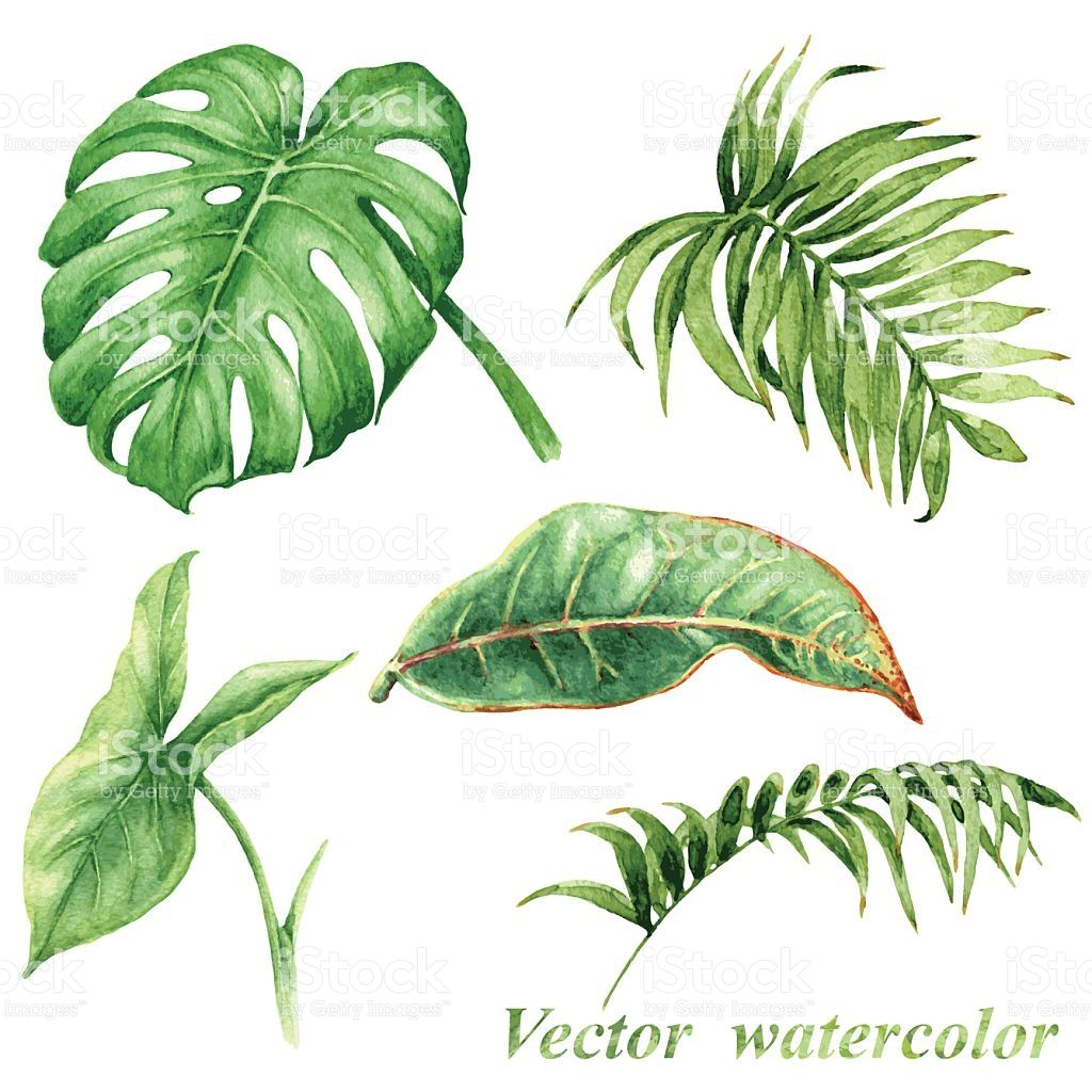Set of watercolor tropical plants leaves isolated on white