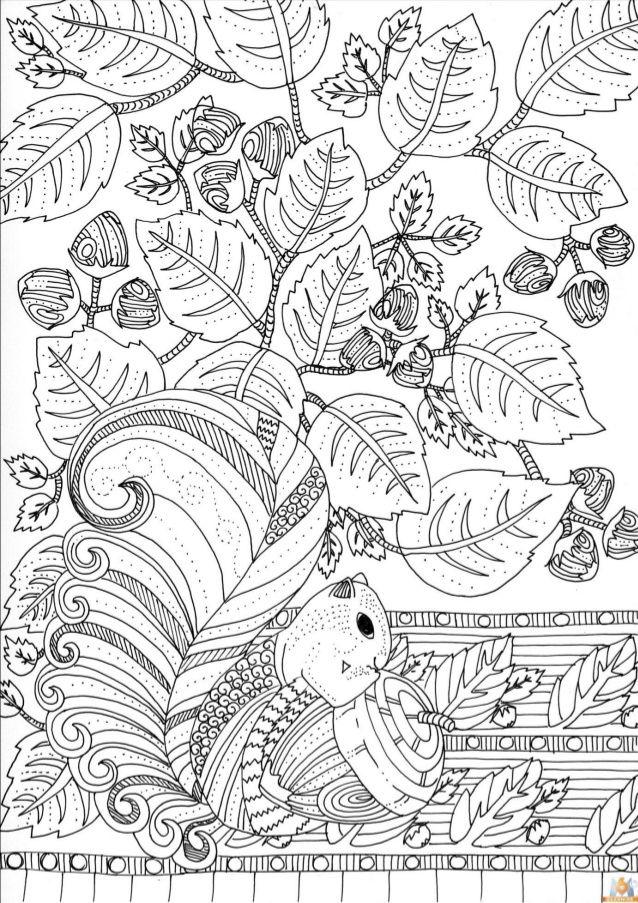 Esquilo   Mandalas y dibujos   Pinterest   Colorear, Mandalas y ...