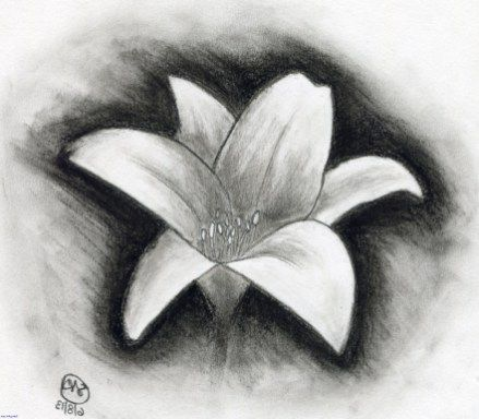 Steps for Portrait Drawing with Charcoal | Flower drawing ...