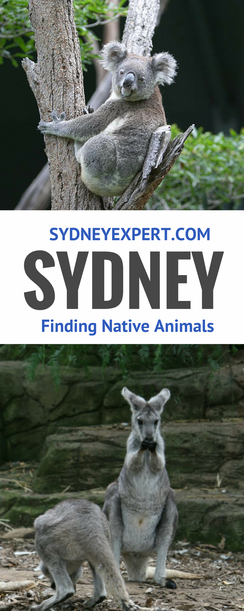 Top 10 Things To Do In Sydney Australia Australia travel