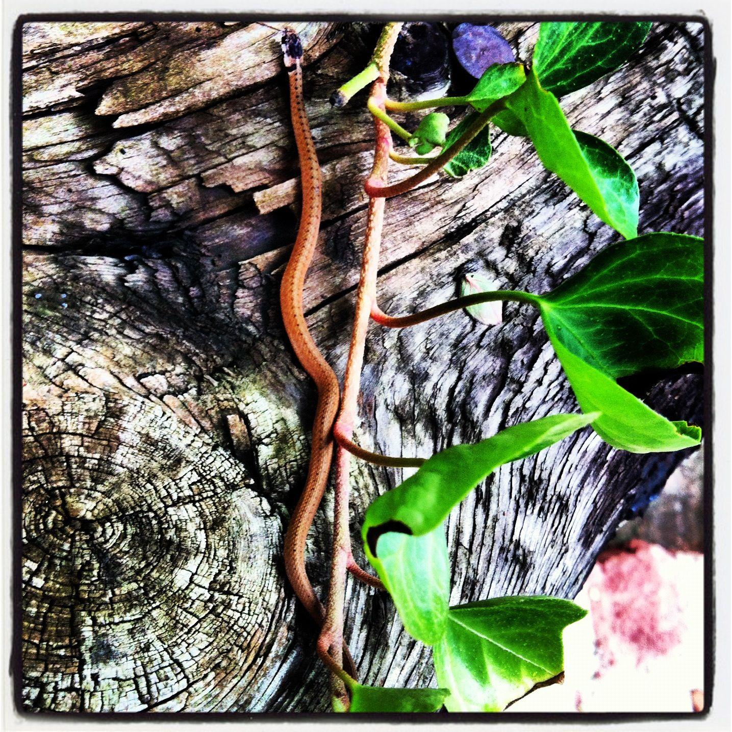 Baby Snake | Baby snakes, Snake, Backyard