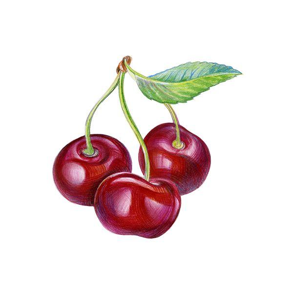 Wineberry by Anna Venig