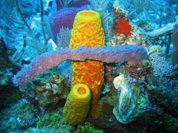 Esponja De Mar Biotecnologia Azul Vida Marina Animales