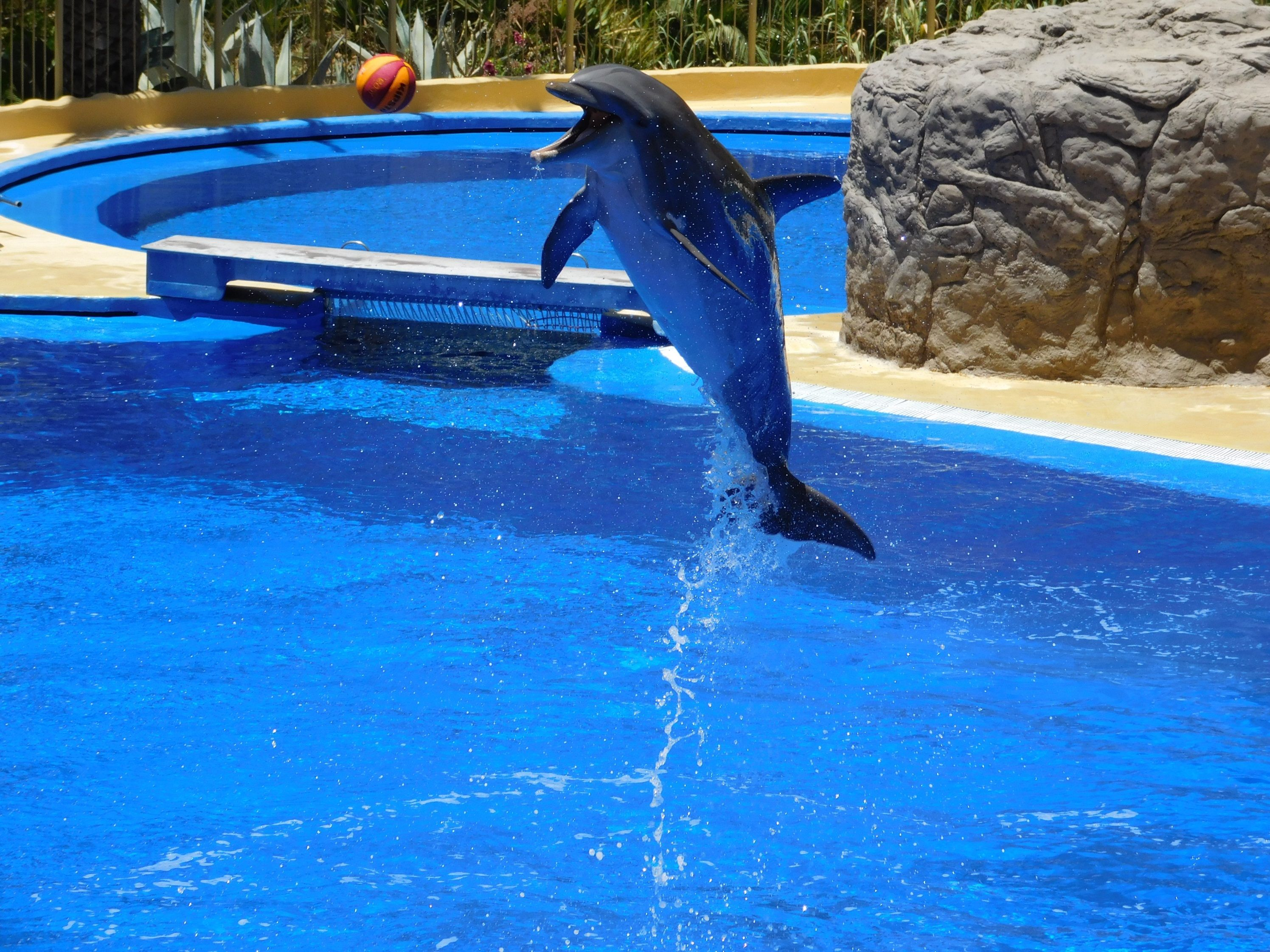 Dolphins They Are So Beautiful Check Out Our New Jewelry Collections Www Women Jewelry Com Water Park Dolphins Park