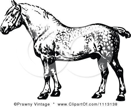 Clipart Vintage Black And White Percheron Horse Royalty Free Vector Illustration By Prawny Vintage Clip Art Vintage Free Vector Illustration Percheron Horses