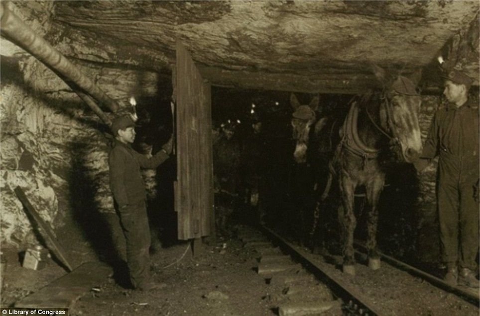 Dark days In a January 1911 photograph a boy hold open a coal mine & From the cotton fields to sardine factories: The stunning images of ...