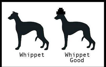 Whippet real good