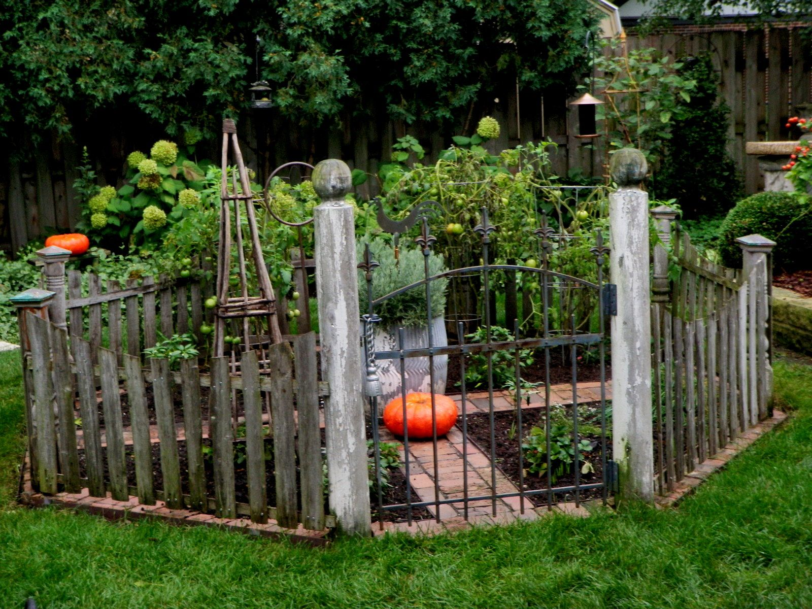 Little Veggie Patch #garden #fence #gate #small #tiny #lawn