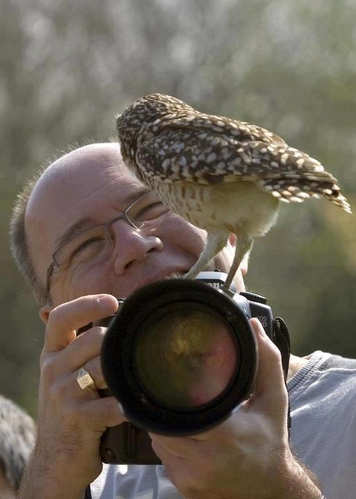 "Owl:  ""Got YOU this time Mr. Wildlife Photographer!"""