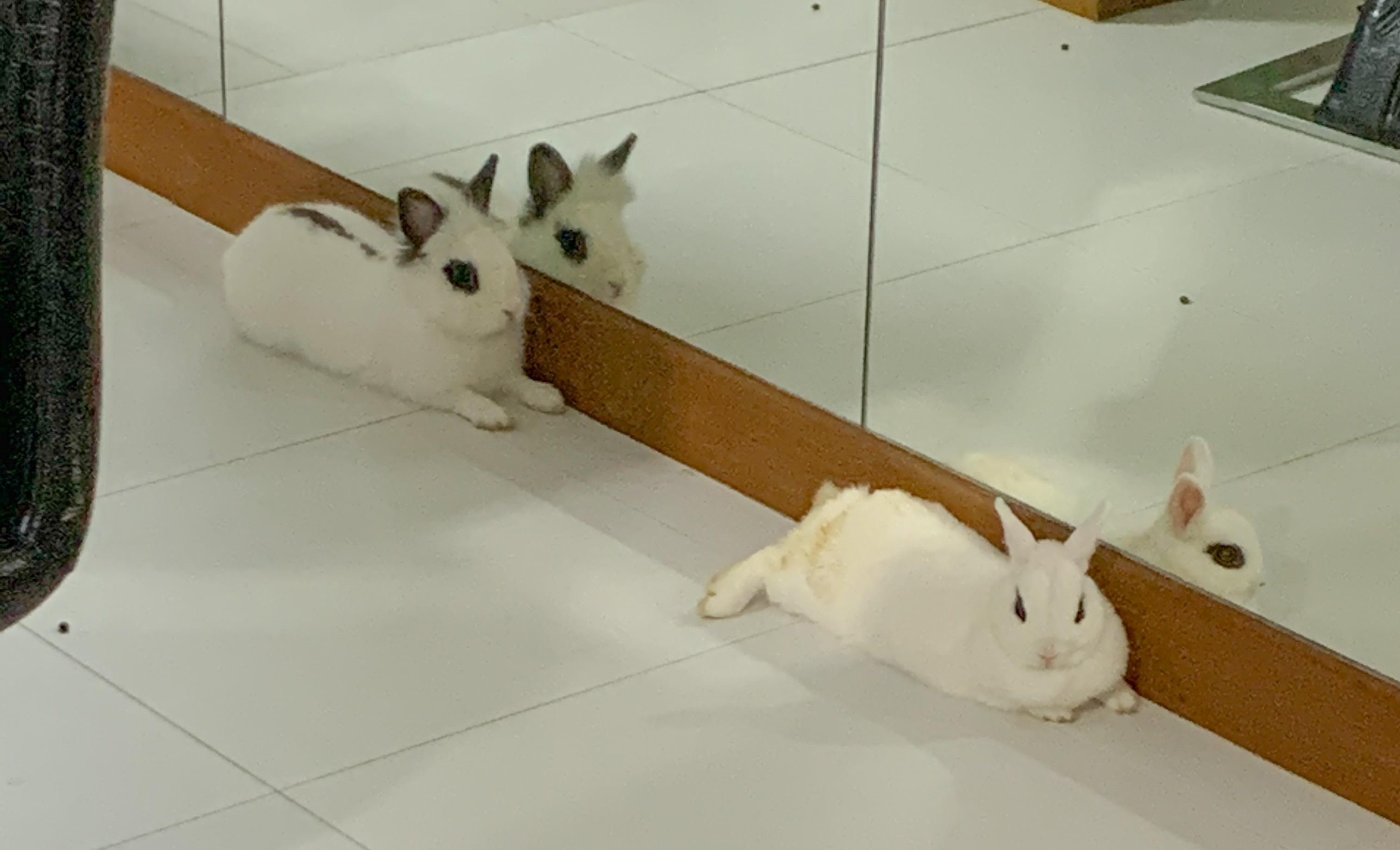 Things You Need To Know Before Buying A Rabbit Rabbit Care Fluffy Rabbit Pet Rabbit