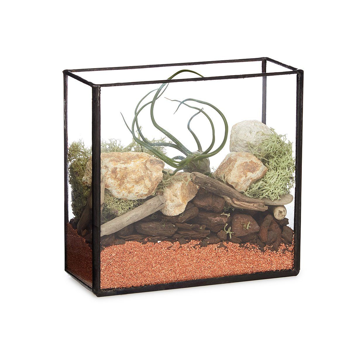 Brass box terrarium kit air plants terraria and diy terrarium this stylish do it yourself kit contains everything you need to make an air solutioingenieria Images
