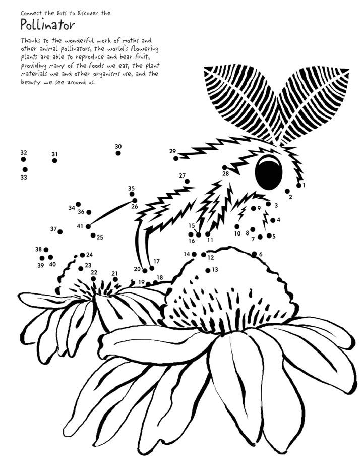 This moth needs your help in order to continue pollinating