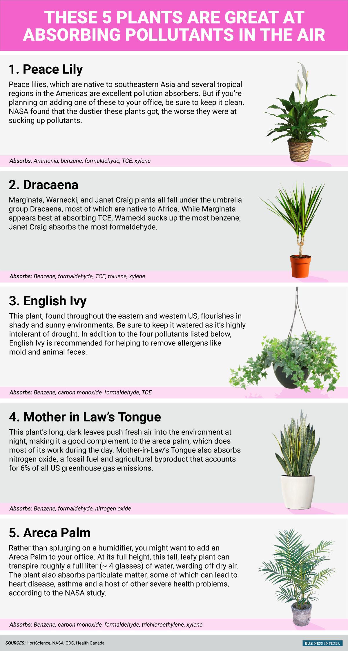 These 5 plants can help keep your indoor air clean | Plants ... on army study, sally ride study, facebook study,