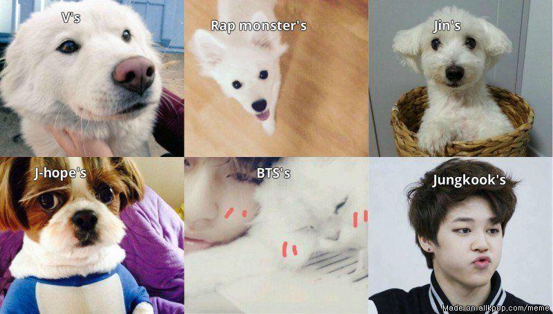 BTS's pets || Meme Center | allkpop