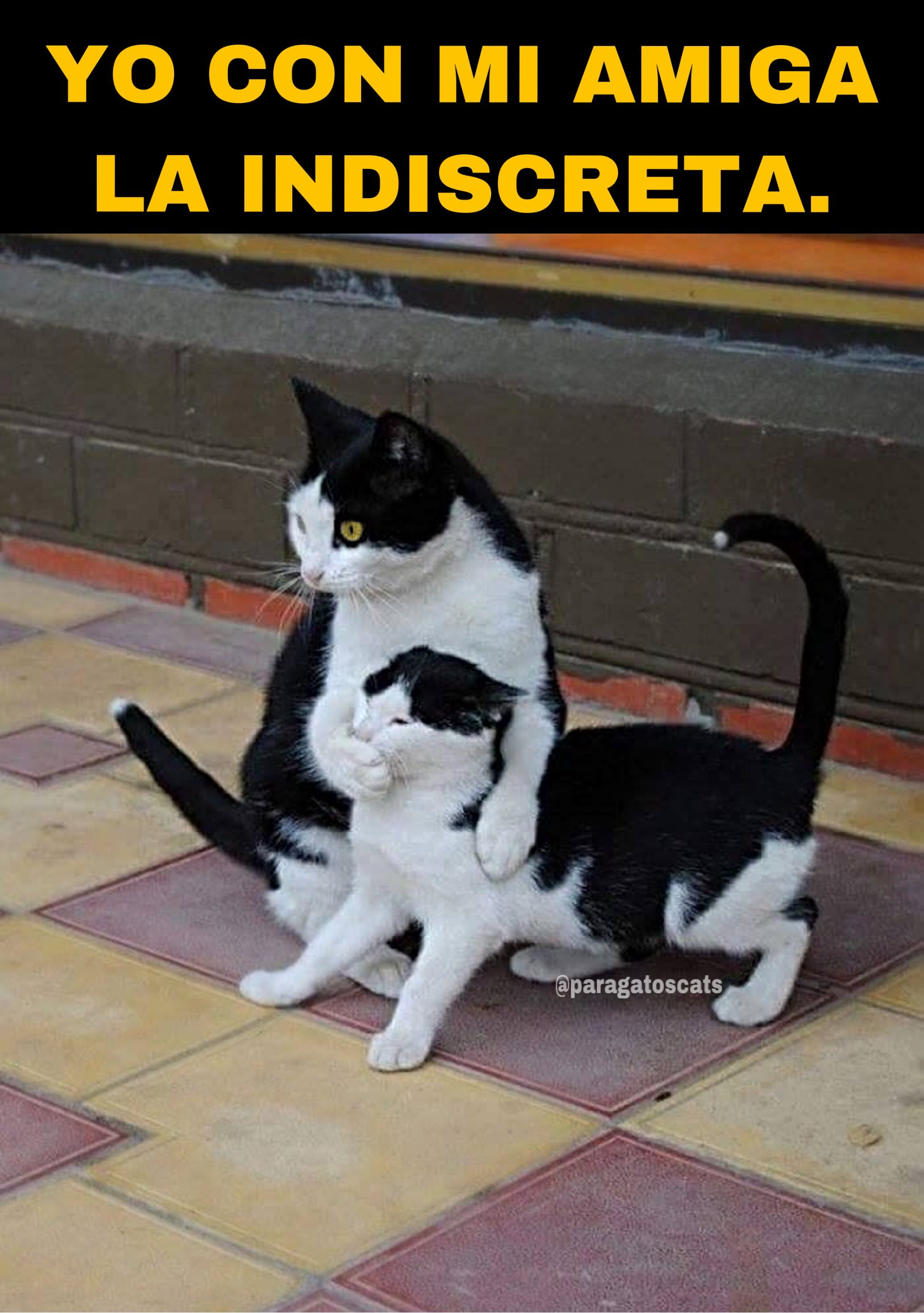 Memes De Gatos Memes Divertidos Los Mejores Memes De