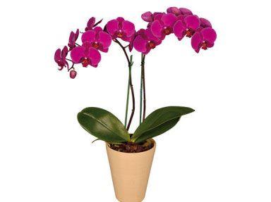 imagenes de orquideas - Google Search
