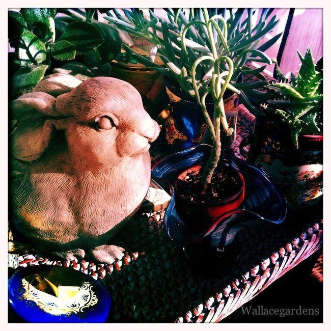 succulent perch