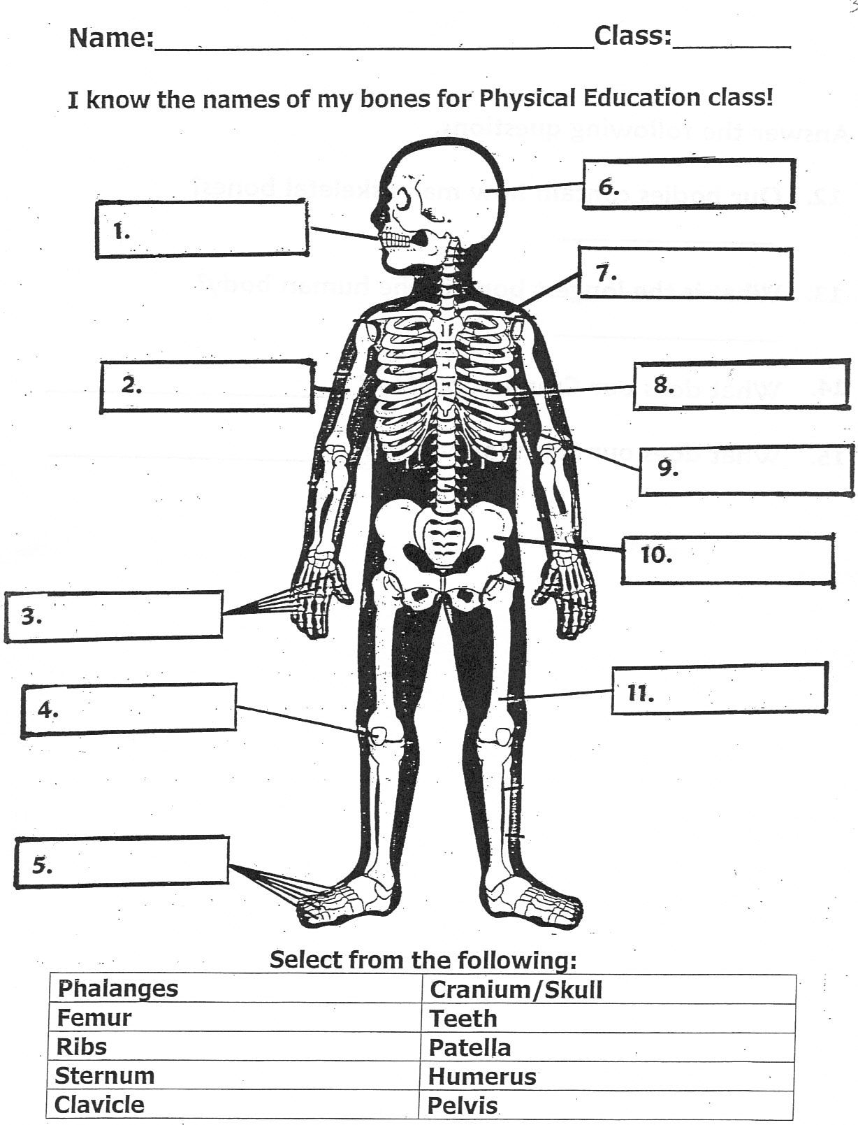 Bones For Kids Worksheet