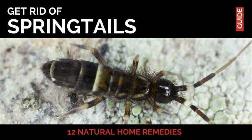 Ever found thousands of tiny hopping insects in your