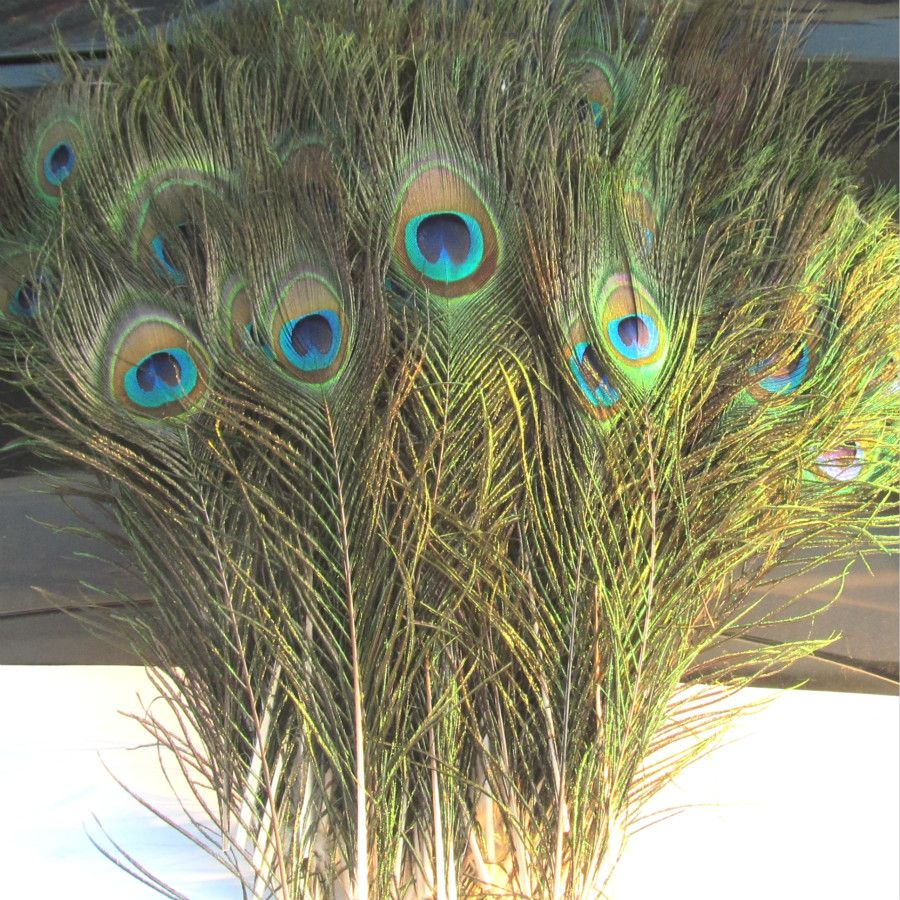10-12 inch Peacock Feathers 20pcs /lot Beautiful Natural Peacock Feathers Eyes for Wedding Party Home Hairs DIY Decoration(China (Mainland))