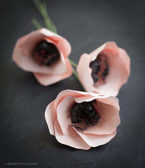 Anemone, kruunuvuokko paperikukka