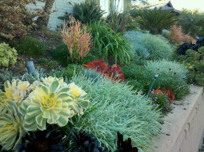 Related Image Garden Design Mood Board Pinterest Succulents
