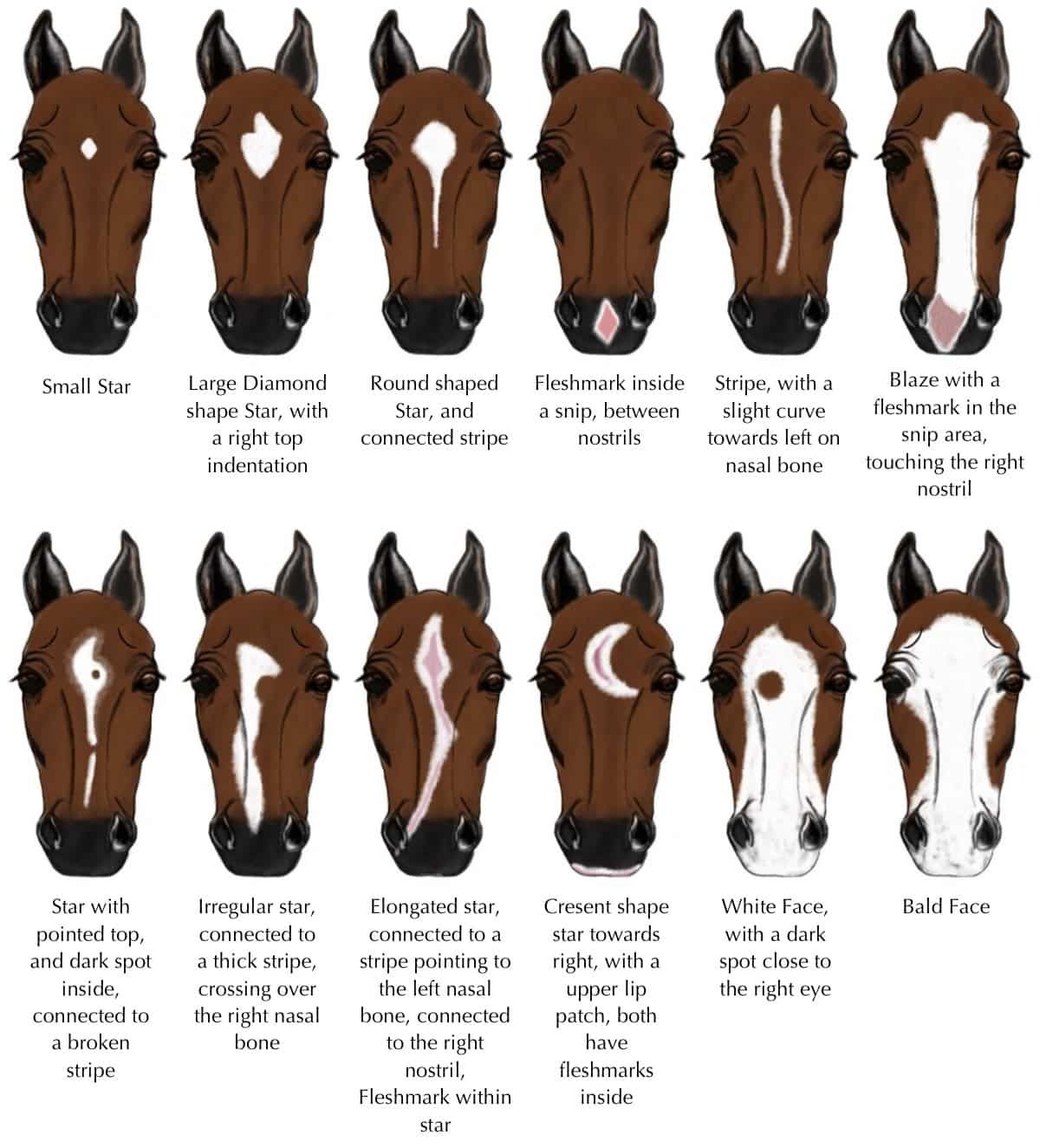 Markings Reference